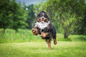 Psychologie du chien
